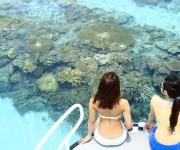 前の記事: 日本在住の外国人ダイバーへ! ~沖縄3泊4日レポーター募集~