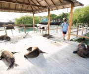 次の記事: リゾートステイで楽しむガラパゴス ~世界遺産の陸も海も楽しむ