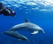 次の記事: 今すぐできる、イルカと一緒に泳ぐコツ&撮影のツボ @御蔵島