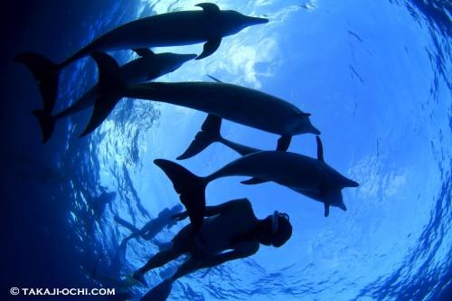バハマ イルカ ドルフィン