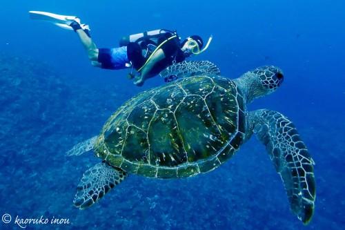 八丈島 アオウミガメ