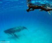 次の記事: 水深12mの浅瀬にとどまる母娘クジラ トンガ・ホエールスイム