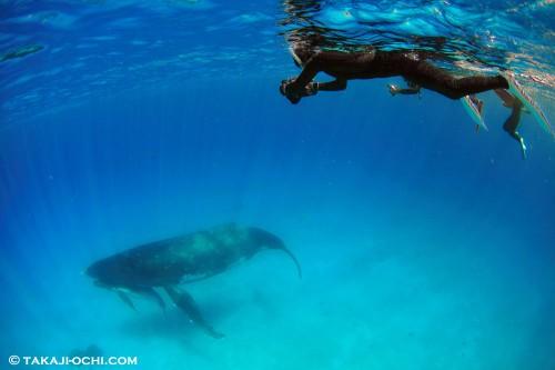水深12mの浅瀬にとどまる母娘クジラ