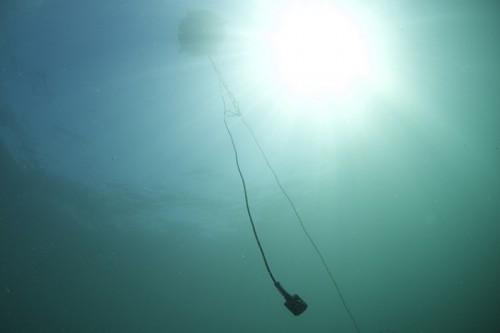 超音波を送受信するマイク