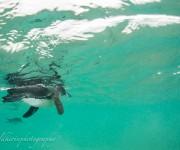 次の記事: 3つの海流が作り上げた摩訶不思議な海 ~ガラパゴスのダイビン