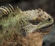 前の記事: ガラパゴス諸島の陸の魅力~共に生きている命の数々~