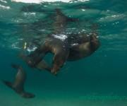 前の記事: 自然写真家・関戸紀倫による「ガラパゴストリップ説明会」開催