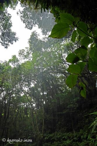 裏見ヶ滝の名前の通り、滝の裏側からの景色