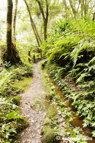 シダ植物が生い茂る山道はパワースポット!?