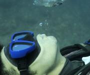 前の記事: これを読めばバブルリングのすべてがわかる! ~ダイバーのため