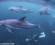 次の記事: イルカ玉にも遭遇! 越智隆治と行く御蔵島ツアー開催レポート
