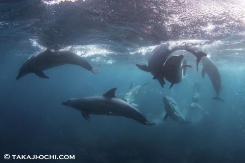 絡み合うように泳ぐイルカと、それを見上げるイルカ
