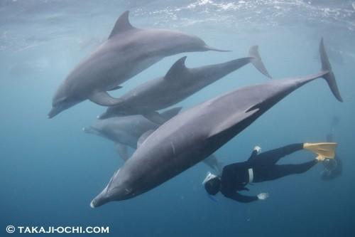 イルカと泳ぐためにスキンダイビング基礎コースに参加してきたという女の子。初めてのドルフィンスイムでこんなに潜れていました!