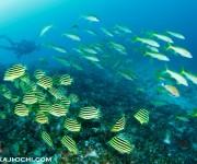 前の記事: 串本の海が凄いと思う本当の理由~伊豆ダイバーが驚く、本州で唯