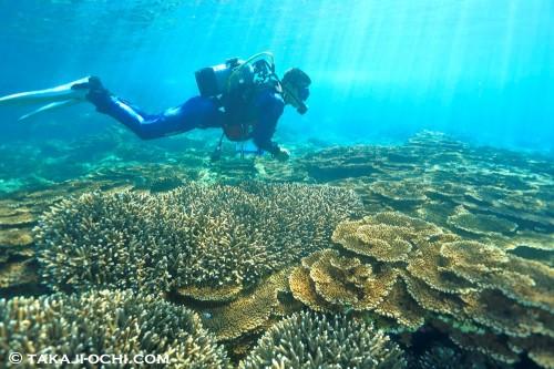 ビーチポイントにはサンゴの群生が広がっている。ドライスーツとテーブルサンゴの組み合わせはハイブリットな海ならでは 「オレンジハウス前」