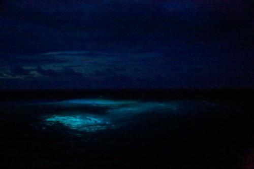 ダイバーの為にチャネルに設置された水中ライトが、不気味に海を照らし出す