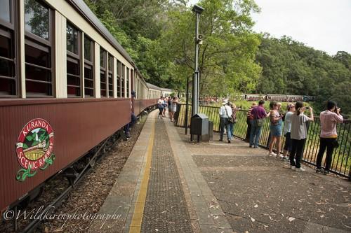 キュランダ高原列車に乗りケアンゼからキュランダまで行くことも