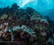 次の記事: 【Day13】水中世界遺産の「グレートバリアリーフ」で、壮大