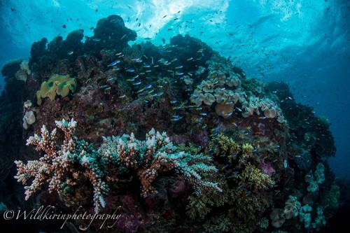 サクソンリーフで撮影した「生き生き」しているサンゴ礁
