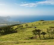 次の記事: 八丈島のアフターダイビングは、知られざる島の絶景スポット巡り