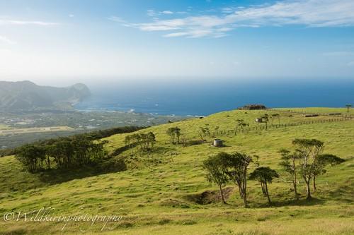 島の南側が一望できるふれあい牧場