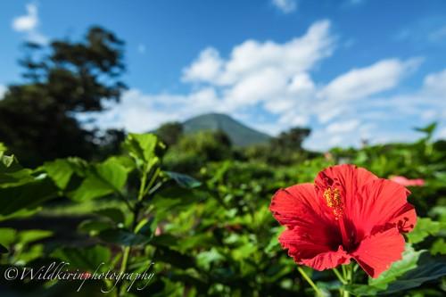 03_08Hachijyo-Oceana-Landscape-91_1