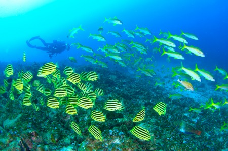温帯の魚、カゴカキダイと熱帯の魚、アカヒメジの群れが見られるのも串本ならでは。「グラスワールド」