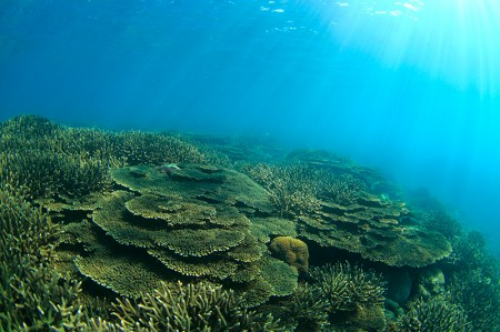 サンゴの上に、太陽の光が降り注ぐ