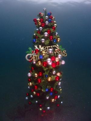 城ヶ島水中クリスマスツリー