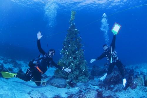 富戸水中クリスマスツリー