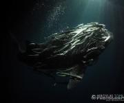 次の記事: 戸村裕行氏の写真展「OCEAN PLANET ~海の中のいの