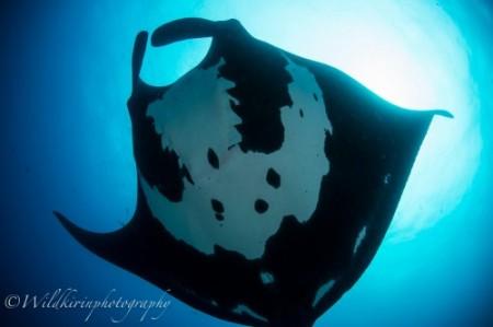 Galapagos-pics-9-500x333
