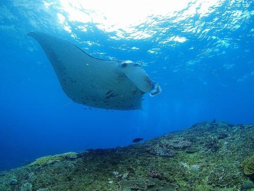 """ダイビングの漂流時、""""ウエイトを捨てない""""という選択の可能性 ~バリ島ヌサペニダより~"""