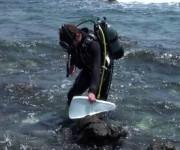 次の記事: 岩場をエントリー&エグジットする際のコツ ~ダイバーのための
