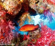 次の記事: タイ・アンダマン海の魚たち ~LINEスタンプvol.1~