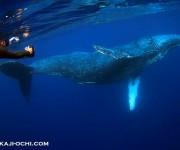 前の記事: リサーチ最終日も水中でスイムに成功! ~奄美クジラ・イルカ協
