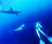 次の記事: 2017年もスタート! Oceanaスキンダイビング(素潜り