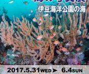 次の記事: 入場無料! 『みんなでつくる海の写真展~伊豆海洋公園の海~v