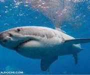次の記事: 南オーストラリアで「ホホジロザメ・ケージダイブクルーズ」を開