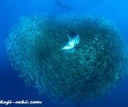 前の記事: 今日から、メキシコ・ムヘーレス島でバショウカジキ捜索。 あの