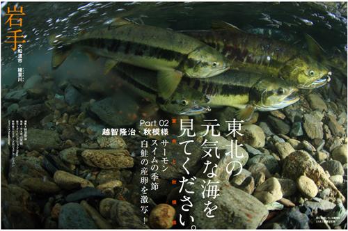 https://oceana.ne.jp/webmagazine/201212_tohoku_autumn