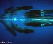 前の記事: シロナガスクジラやマッコウクジラと連日遭遇! ~スリランカ・