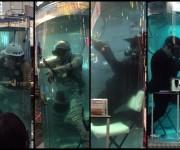 次の記事: 【急募】水族館の清掃からパフォーマンスまで⁉︎ 潜水士による