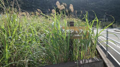 草に埋もれてほとんど見えないけど、この看板が目印