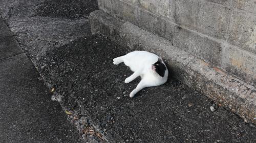 須古茂集落の猫ちゃんは警戒心まったくなし