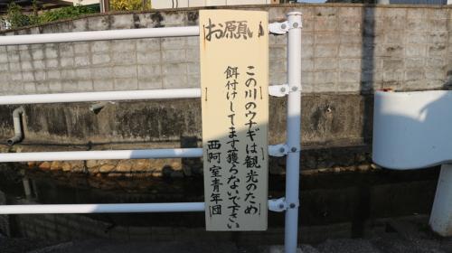 ai_amami02_19