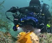 """次の記事: 水中撮影に革命を起こすか!? 斬新なライトシステム""""RGBl"""