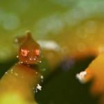幻のポイントで奇跡的に発見したダンゴウオ