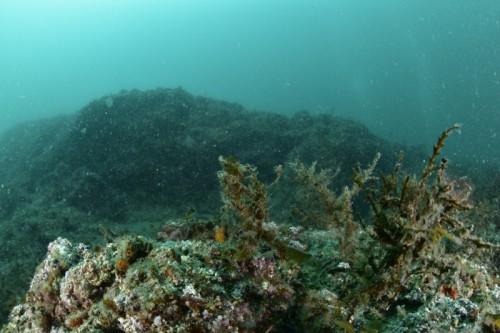 奥のこんもりとした岩山が背景に被り、さらに手前の海藻や岩の凹凸が邪魔