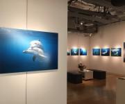 前の記事: 高縄奈々「Tokyo Dolphins ―東京の島のイルカた